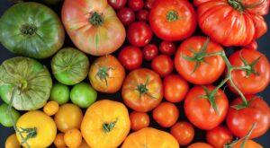 consigli per piantare i pomodori comecosaquando