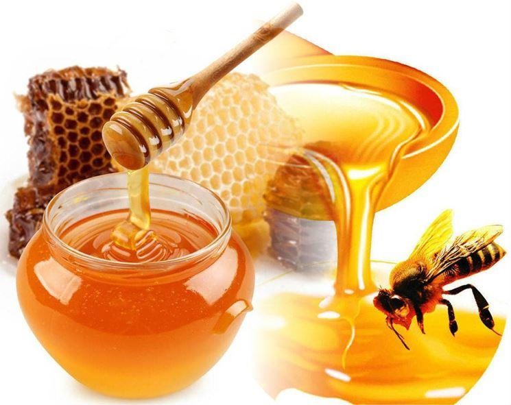 miele fresco comecosaquando