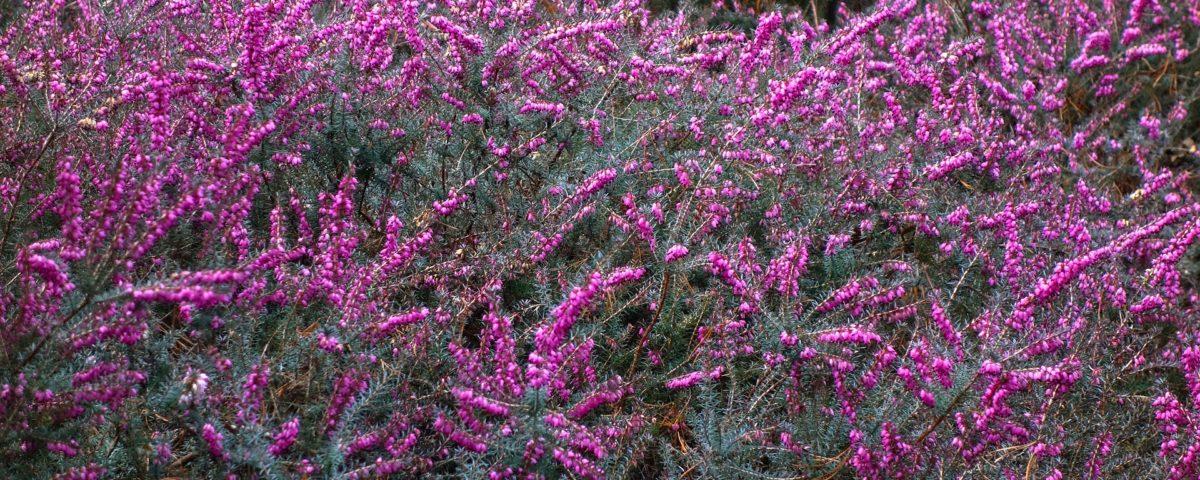 5 erbe da piantare in primavera comecosaquando