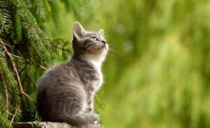 colore del pelo del gatto comecosaquando