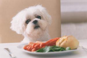 come allontanare il cane da tavola comecosaquando
