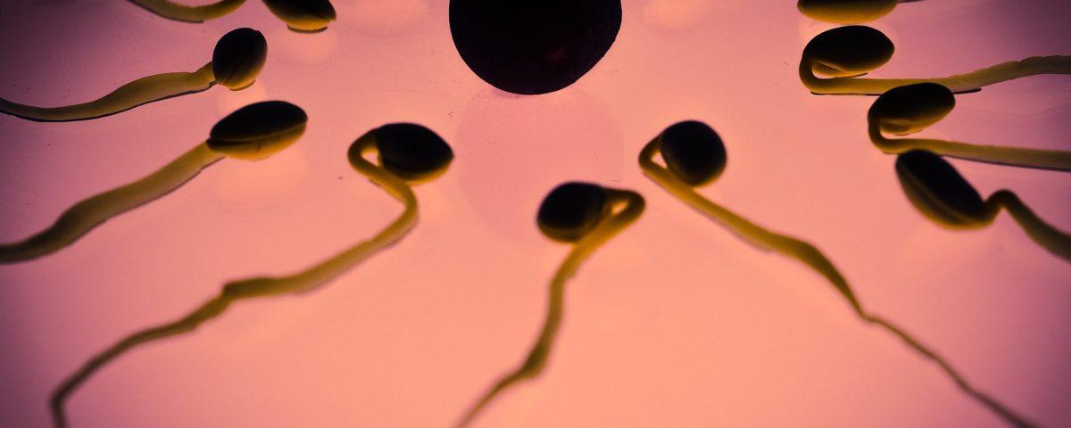 7 fatti curiosi che non sapevi sugli ovuli comecosaquando